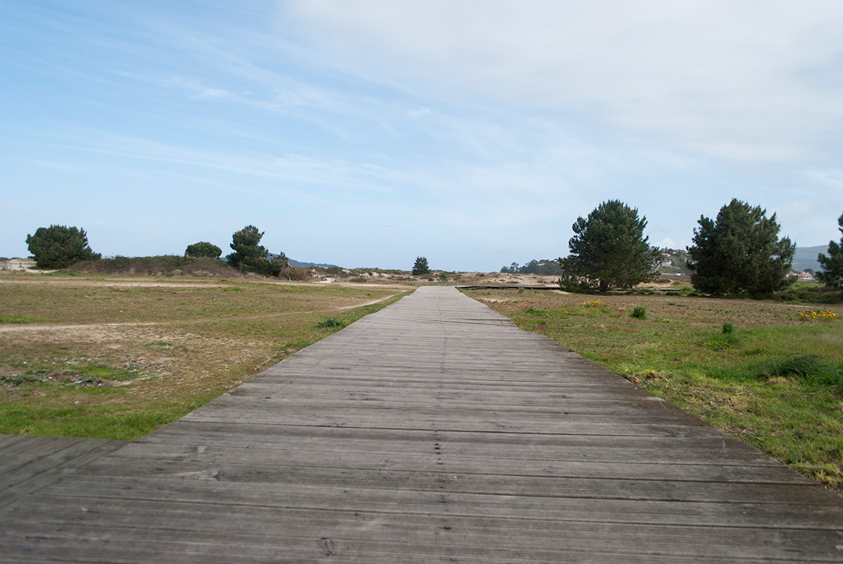 Dunas da Praia Ladeira