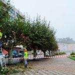 O Concello de Baiona inicia a poda de árbores