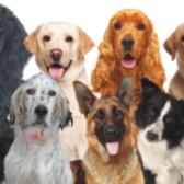 """As persoas participantes do Proxecto Vincúlate do Concello de Baiona organizan unha recollida solidaria de produtos para a protectora de animais """"Os Palleiros""""."""